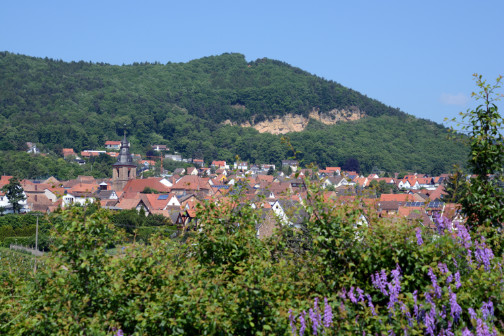 Weinort Frankweiler in der Südpfalz