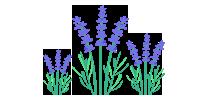 Ferienwohnung Lavendelgarten